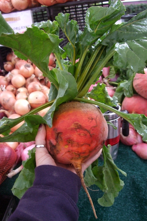 golden giant beet