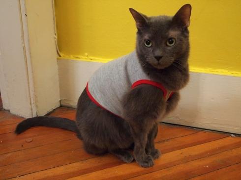 american apparel cat shirt urbanpocketknife